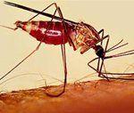 Choroba efekty leczenia malarii