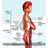 Боли в спине в позвоночнике – причины, лечение
