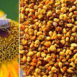 Большая польза пчелиной пыльцы