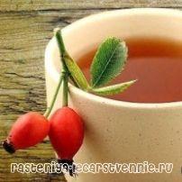 Чай из шиповника - как заваривать, полезные свойства, противопоказания