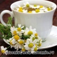 Чай ромашка: польза и вред, полезные свойства