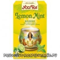 Чай с мятой: польза и вред, рецепт, полезные свойства