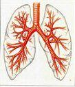 Чем лечить бронхит и кашель