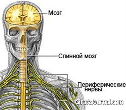 Чем лечить нервную систему?
