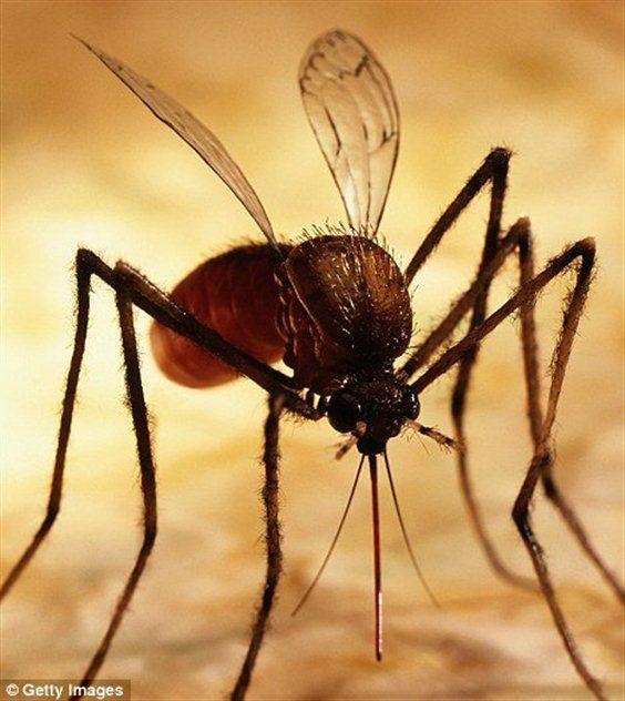 Чем лечить укусы насекомых