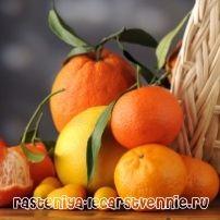 Чем полезны мандарины и апельсины?