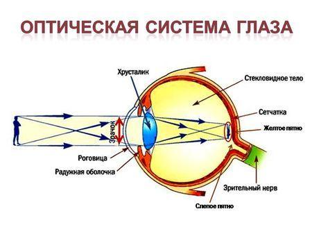 Что такое зрительный анализатор: строение и функции