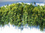 Cушка растительного лекарственного сырья