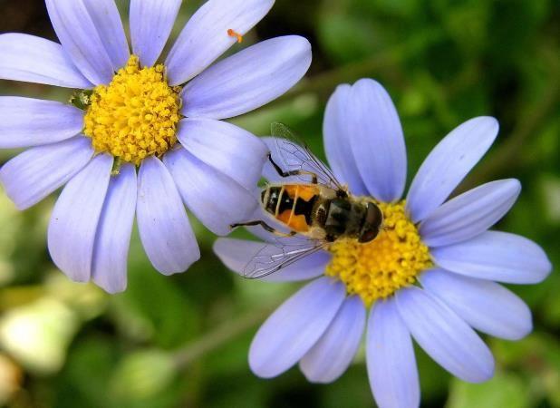 Цветочный мёд: полезные свойства