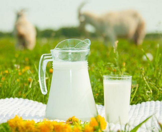 Детская молочная смесь на козьем молоке: какие выпускаются, отзывы