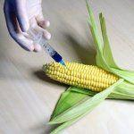 Генетически модифицированные продукты питания