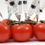 Генномодифицированные продукты в рационе человека