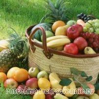 Ягоды, овощи, фрукты - полезные продукты