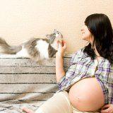 Как кошки могут повлиять на беременность