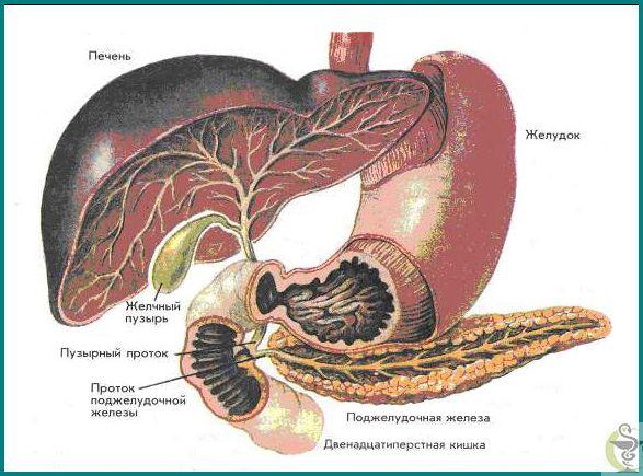 Cum de a trata pancreatita cronica si ceea ce el a numit