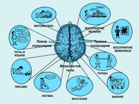 Как развить правое полушарие мозга?