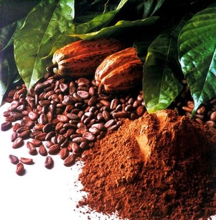 Какао: калорийность и полезные свойства