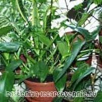 Какие комнатные растения полезны?