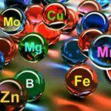 Какие полезные микроэлементы нужны организму человека