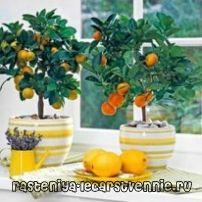 Какие растения полезно держать дома?
