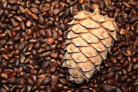 Кедровые орехи: польза, употребление, рецепты