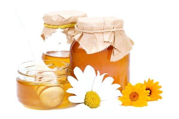 Кипрейный мед: полезные свойства и противопоказания