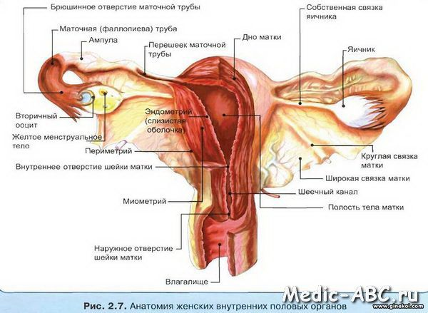 Chist ovarian