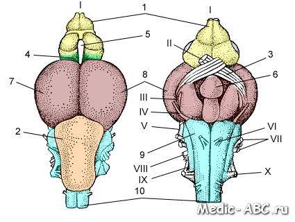 Torbiel szyszynki mózgu