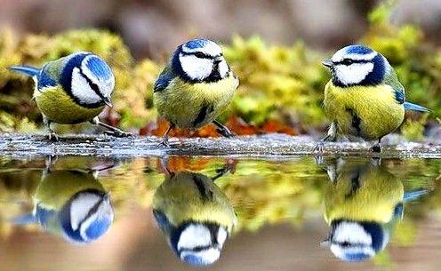 Karmić ptaki - zrobić dobry