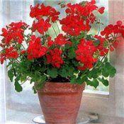 Лекарственные декоративные растения