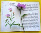 Лекарственные растения и травы лугов