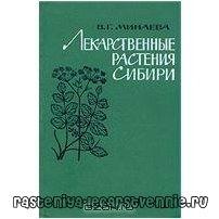 Лекарственные травы и растения Сибири