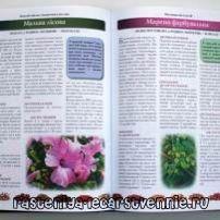 Лекарственные травы и растения Украины