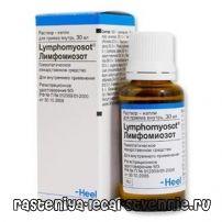 Лимфомиозот - инструкция, отзывы, применение, аналоги, как принимать, состав