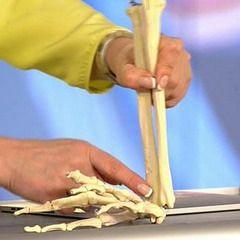 Лучевая кость человека