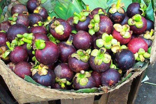 Мангостин: удивительный тропический фрукт. Полезные свойства мангостина