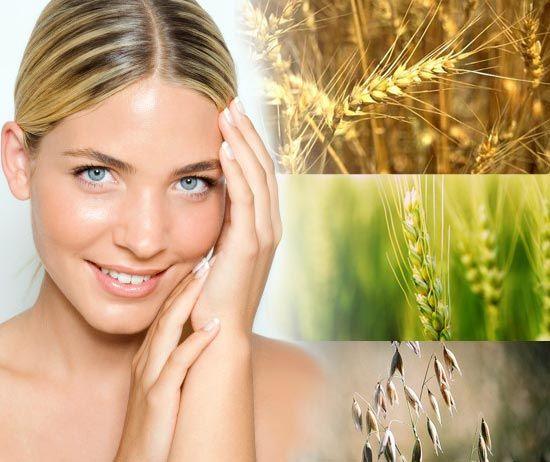 Масло зародышей пшеницы: применение, отзывы