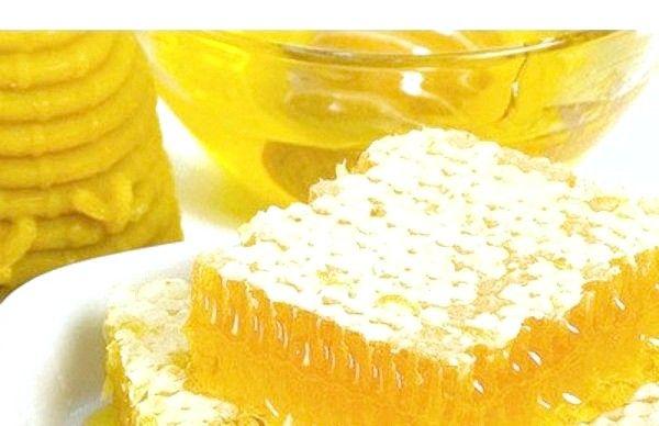 Мед с пергой полезные свойства и противопоказания