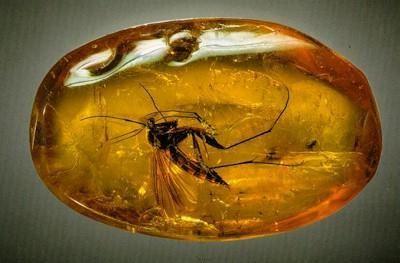 Медицинские свойства янтарной кислоты