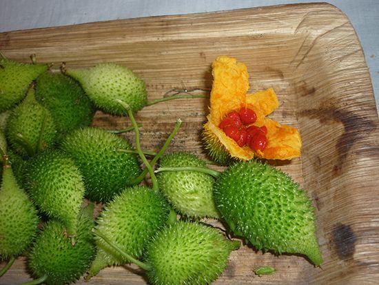 Это растение, а точнее, его плоды, листья, корневища, стебли, семена получили широкое применение как в народной