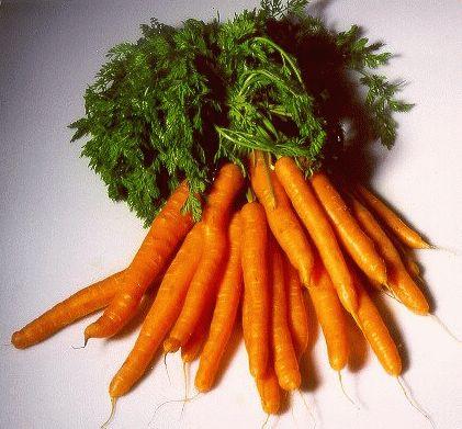 Морковь полезные свойства весной