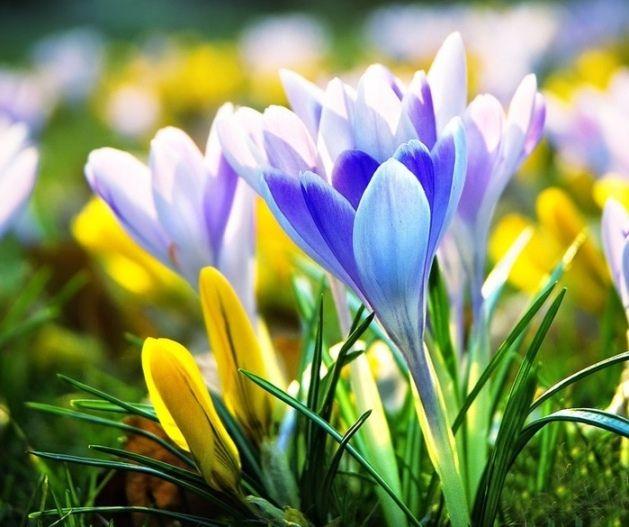 Mężczyźni dla kobiet: najlepsze życzenia w dniu 8 marca
