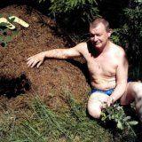 Нетрадиционное лечение заболеваний муравьями