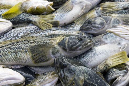 Нототения: что это за рыба, ее основные особенности