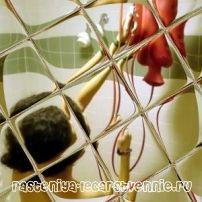 curățare clisma Intestinal la domiciliu
