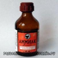 Оказание первой помощи при обмороке. Укусы насекомых - лечение Аммиак буфус