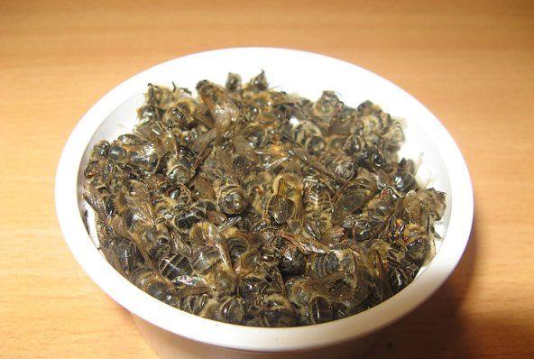 Пчелиный подмор: применение и лечение
