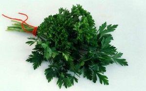 Петрушка: полезные свойства и применение петрушки
