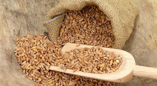 Полба: полезные свойства, калорийность крупы и способы ее приготовления