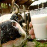 Полезные качества молока для организма